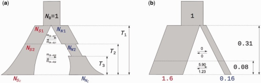 Model diagrams. (a) General model setup. (b) Model scheme and parameter estimates of backward migration rates , times (in units of ) and population sizes (in units of N0) for the best fitting model (secondaryContact6).