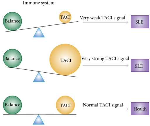 relationship between the immune system and