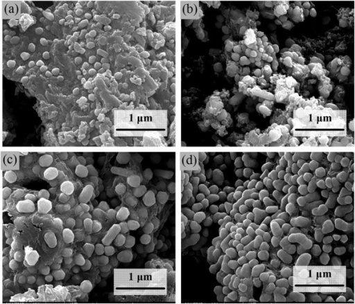 SEM images of product after the decomposition of the cupric tartrate at different temperatures. (a) 200°C, (b) 250°C, (c) 350°C, and (d) 400°C.