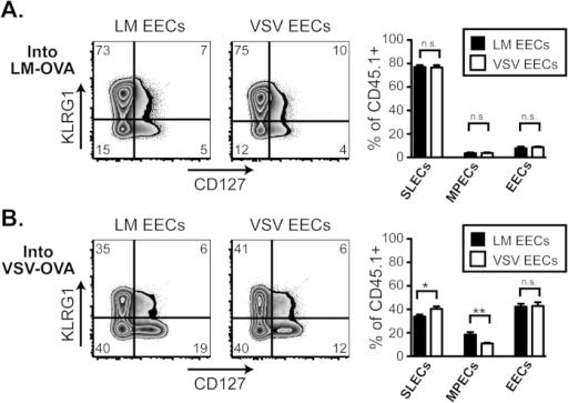 EECs transferred into infected mice show plasticity by modulating their differentiation according to the infection-induced inflammatory environment of the recipient mouse.A. EECs were purified, as described in Fig. 2A, following LM-OVA or VSV-OVA infection and transferred into LM-OVA infected recipients that had been infected for 2 days. 6 days following the EEC transfer, CD8+ CD45.1+ transferred EECs in the spleen were analyzed for KLRG1 and CD127. Percentages of SLECs, MPECs, and EECs are graphed for both LM-OVA EECs and VSV-OVA EECs from 3–4 mice. This data is representative of at least 2 experiments. B. Same as A, except recipient mice were infected with VSV-OVA 2 days prior to EEC transfer.