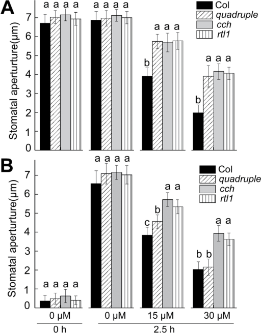 ABA-induced stomatal closure (A) and ABA-inhibited light-induced stomatal opening (B) in the wild-type Col, the pyr1 pyl1 pyl2 pyl4 quadruple mutant (quadruple), and two mutant alleles of the ABAR/CHLH gene (cch and rtl1). Values are means ±SE from three independent experiments, and different letters indicate significant differences at P<0.05 (Duncan's multiple range test) when comparing values within the same ABA concentration. n≥60 apertures per experiment.