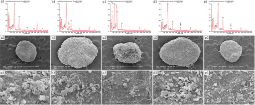 Scanning electron micrograph (SEM) images (a2–e2, a3–e3) and energy-dispersive X-ray (EDX) analysis (a1–e1) of anaerobic granular sludge in the reactors exposed to Ag NPs, MgO NPs, nZVI and Fe2O3 NPs at the indicated concentrations.Control (a1–a3), Ag NPs-500 (b1–b3), MgO NPs-500 (c1–c3), nZVI-10 (d1–d3), Fe2O3 NPs-100 (e1–e3).