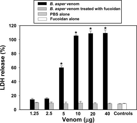 Inhibition of the cytotoxic activity of B. asper venom on smooth muscle cells in culture.Venom was incubated with fucoidan for 60 min at room temperature, and cytotoxicity was tested as described in Methods and in the legend of Fig 7. Controls included PBS alone, venom incubated with PBS, and fucoidan alone. The dose-dependent cytotoxic effect of venom, reflected in LDH release, was completely abrogated by incubation with fucoidan. Results are presented as mean±S.D. (n = 3). * p<0.05 when compared with cells incubated with venom+fucoidan.