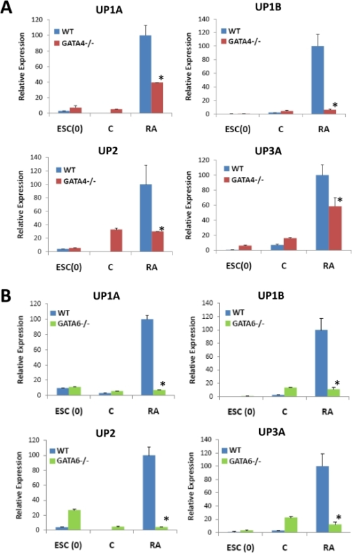 GATA4 and GATA6 are crucial signaling molecules in RA-mediated upregulation of UP expression in ESCs.Real time RT-PCR analysis of uroplakin expression in WT, GATA4−/− [A] or GATA6−/− [B] ESCs cultured in the presence (+RA) or absence (C) of 10 µM RA for up to 9 d. ESC(0)  =  undifferentiated ESCs. Levels normalized to GAPDH expression. Mean ± SD per data point. N = 3–4 per data point. (*) = p<0.05, in comparison to levels observed with RA-treated WT cultures.