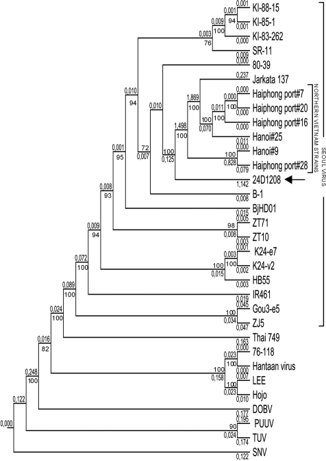 Phylogenetic tree (CLC-Combined Workbench 3) showing partial sequences of the medium segment (nt 810–2355). The newly identified Seoul virus (SEOV) was denoted as 24D1208 (arrow). The M segment sequences of the reference strains are: SEOV strains KI-88-15 (D17594), KI-85-1 (D17593), KI-83-262 (D17592), SR11 (M34882), 80–39 (S47716), Jakarta137 (AJ620583), Haiphong port #7 (AB355728), Haiphong port #20 (AB355730), Haiphong port #16 (AB355729), Hanoi #25 (AB355733), Hanoi #9 (AB355732), Haiphong port #28 (AB355731), B-1 (X53861), BjHD01 (DQ133505), ZT71 (EF117248), ZT10 (DQ159911), K24-e7 (AF288652), K24-v2 (AF288654), HB55 (AF035832), IR461 (AF458104), Gou3-e5 (AF288650), and ZJ5 (FJ811839); Thailand virus strain 749 (L08756); Hantaan virus strains 76–118 (M14627), Hantaan (NC005219), LEE (D00377) and Hojo (D00376); Dobrava virus (DOBV) strain Dobrava (L33685); Puumala virus strain Sotkamo (X61034); Tula virus (TUV) strain Tula/Moravia/5302v/95 (Z69993); and Sin Nombre virus (SNV) strain NMH10. The numbers at the nodes are bootstrap confidence levels for 1,000 replications. Only bootstrap support values >70% are shown.
