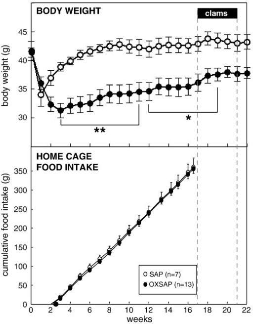 Study 1: body weight (upper panel) and cumulative food intake in the home cage (lower panel) of adult male hamsters which were maintained in long days and received bilateral infusions of saporin (SAP, open symbols) or a saporin-orexin B conjugate (OXSAP: closed symbols). Solid bars (clams) and dotted lines indicate the period when hamsters were removed from their home cages and studied in metabolic cages on three separate occasions (see main text), food intake was not monitored in their home cages during this time. Values are group mean ± SEM, n = 7 SAP and n = 13 OXSAP, *P < 0.05 and **P < 0.01 vs SAP group at the respective time point.