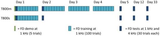 Training regimens for Experiment 2.Two groups trained on 800 trials of FD per day. The T800 m group completed four days of training and the T800 s group completed one. Tests consisted of assessment at the trained and an untrained frequency, and were conducted at the beginning of Days 1, 2 and 5, and then one week (Day 12) and four weeks afterwards (Day 33). A five trial demo preceded the experiment.