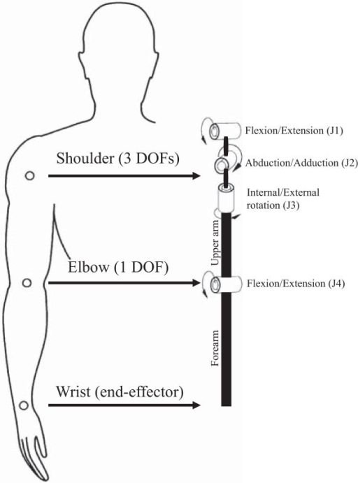 Kinematics of the proposed model. The kinematic diagram of the proposed biomechanical model and the sequence in which the different DOFs are defined. For each DOF arrows represent the direction of positive angles and torques (right arm). To compare right and left movements, the positive direction of J2 and J3 DOFs is opposite to the one showed in figure.