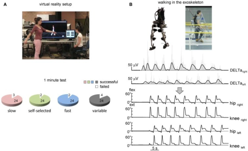 On-line shoulder muscle EMG control of leg movements. (A) Controlling of walking avatar in a virtual reality setup (third person viewpoint). To control the timing and duration of individual steps, the subject produced alternating arm swinging movements in standing position (upper panel). Lower panel – pie charts showing the percentage of trials with a successful 1-min test for producing stepping (if the algorithm predicted consecutive uninterrupted steps during the 1-min trial) using alternating arm swinging at different frequencies (n = 8 subjects, 24 trials total for each condition). (B) Arm EMG-based control of stepping in the exoskeleton by the healthy subject. Upper traces – rectified (gray) and low-pass filtered (black) EMGs of shoulder muscles. Each step duration and initiation were calculated and triggered based on the timing of the shoulder EMG peaks. Bottom traces – knee and hip joint angle kinematic patterns of eight consecutive steps along a 9-m walkway.