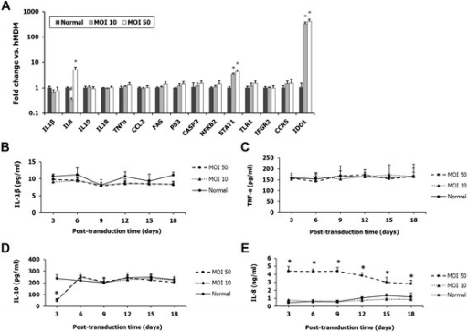 The effects of transduction with lentiviral vector HR-Hutat2 on the gene expression of human macrophage-related functional and regulatory genes and on kinetics of pro-inflammatory cytokines IL1β, IL8, IL10, and TNF-α. Human monocyte-derived macrophages (hMDM) were differentiated from isolated peripheral blood mononuclear cells in M-CSF-containing medium. On day 7 and day 8 in vitro (DIV 7 and DIV 8), hMDMs were transduced with HR-Hutat2 vector at a MOI of 10 or 50. Total RNA was extracted from non-transduced hMDM (Normal) and transduced hMDM on day 9 post-transduction. Cell culture mediums were collected every 3 days post-transduction. (A) Comparative analysis of the transcriptional profiling of 15 hMDM-related functional and regulatory genes by qRT-PCR. Among the 15 genes, only the transcription of IL8, STAT1, and IDO1 genes changed. (B–E) Sequential changes of IL1β, IL10, IL8, and TNF-α levels in the supernatants of normal and transduced hMDMs at a MOI of 10 or 50. Normal, Non-transduced hMDM; MOI 10, hMDM transduced with HR-Hutat2 at the MOI of 10; MOI 50, hMDM transduced with HR-Hutat2 at the MOI of 50. *P <0.01, #P <0.05 compared with normal. Results shown represent mean values from three independent experiments. Error bars denote the s.e.m.