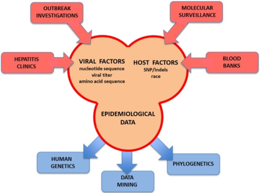 Advanced HCV molecular surveillance. The main components required for advanced molecular surveillance of HCV are listed. Global databases containing comprehensive information concerning transmission events are used as a source of information to draw conclusions about viral spread. Advanced molecular tools and data mining analyses are required to accurately identify the nuances driving the transmission of HCV.