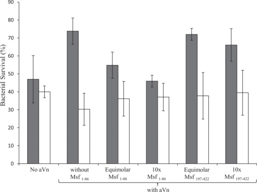 Inhibition of aVn-mediated increased serum resistance by vitronectin-binding Msf constructs.Serum bactericidal assay using MC58 Msf+ Δopc (grey bars) MC58 Δmsf Δopc (white bars). Bacteria were incubated in normal human serum (10%) with aVn (10 μg/ml) or without aVn as indicated. Where included, Msf fragments were added at either equimolar or 10x excess molar amounts relative to aVn as indicated. In the presence of Msf1–86 but not Msf197–422 the protective effect of aVn was diminished. Data shown are average values and ranges from two independent experiments each comprising triplicate determinations.