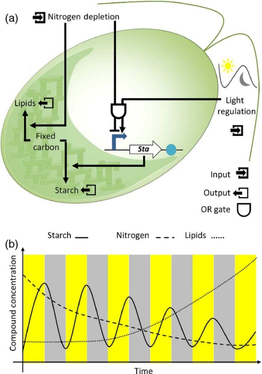 A schematic of synthetic biology applied to create a ci | Open-i