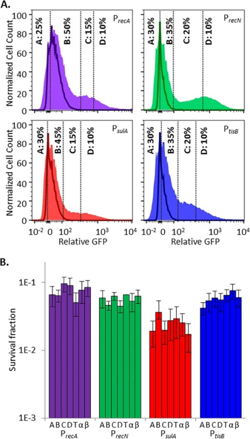 Induction of the SOS response in stationary-phase persisters and nonpersisters is equivalent. (A) GFP induction from SOS transcriptional reporters with ofloxacin. Unshaded curves, ΔrecA mutant controls treated for 5 h with ofloxacin; shaded curves, samples treated for 5 h with ofloxacin. Events in gates C and D were considered to have responded to ofloxacin because ≤2% of the events from ofloxacin-treated ΔrecA mutant controls fell within those gates. Controls for each reporter are provided in Fig. S1 and S4 in the supplemental material. (B) Survival fractions of ofloxacin-treated cells from gates designated in panel A. T, total-population control passed through the sorter (all gates); α and β, samples diluted to postsorting cell density before and after sorting that did not themselves travel through the sorter. Sorting did not significantly reduce sample culturability. This was determined by a lack of significant difference in survival between the total sorted population (T) and the presorting (α) or postsorting (β) controls (by Student's t test, two tails with unequal variance) for any of the SOS reporters tested. Survival fractions were calculated relative to the cell density of sorted samples, 3 × 105 cells/ml. Differences between the survival of PsulA (fractions or controls) and the other three SOS reporters were not significant for the majority of the comparisons, as determined by Student's t test (two tails with unequal variance). Biphasic killing was observed for all strains (see Fig. S2 in the supplemental material), and reanalysis of FACS-segregated populations is provided in Fig. S5 in the supplemental material.