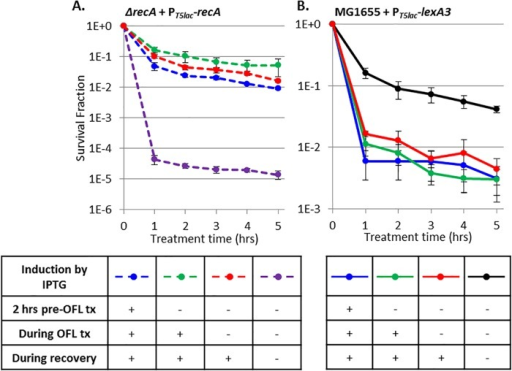 RecA and the SOS response are critical to persistence only during recovery from ofloxacin treatment (OFL tx). (A) Ofloxacin persisters decreased >1,000-fold in the absence of RecA expression (dashed purple) relative to when RecA was expressed from 2 h pretreatment with ofloxacin through recovery (dashed blue). RecA induction on LB plates during recovery only (red) was sufficient to restore persisters to WT levels. (B) Ofloxacin persisters decreased 25-fold with LexA3 (blue) relative to the WT (black). LexA3 induction on LB plates only (red) maintained this reduced survival. We note that LexA3 induction only during recovery reduced the overall viability in both ofloxacin-treated and untreated samples, and this was accounted for by plotting the surviving fraction. Data are average values ± standard errors from at least three biological replicates. Numbers of CFU per milliliter for all samples and controls are provided in Fig. S7 in the supplemental material.