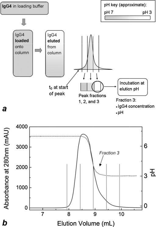 Schematic of experimental design where incubation at low pH follows protein A chromatography (a). Incubation is assumed to begin when the elution peak begins, denoted t0. Fractions containing approximately the first two thirds of the elution peak were at pH conditions considerably higher than the elution buffer pH. IgG concentration and pH in fraction 3 were the conditions reproduced in solution experiments for comparability with column experiments. A precise representation of the experimental outcome can be seen in (b), a chromatogram from a protein A chromatography run. The solid line (left y-axis) represents the IgG elution peak and the dotted line (right y-axis) indicates the pH of column effluent, as measured by the in-line pH probe. Here, flow of elution buffer begins at 7 mL elution volume. The last two fractions of the elution peak, indicated within vertical lines in (b), were at pH conditions low enough to induce aggregation.