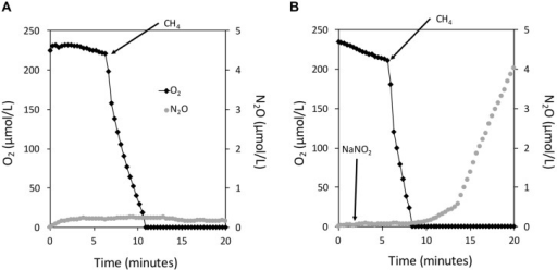 The instantaneous coupling of CH4 oxidation to NO2- reduction in Methylomicrobium album strain BG8 under hypoxia. Experiments were performed in a closed 10 mL micro-respiratory chamber outfitted with an O2 and N2O microsensor and logged with Sensor Trace Basic software. O2 (black diamonds) and N2O (gray circles) were measured using microsensors. Cells of M. album strain BG8 were harvested as described in the materials and methods and resuspended in nitrogen free mineral salts medium. Arrows mark the addition of CH4 (∼300 μM) and NaNO2 (1 mM) to the micro-respiratory chamber in all panels. There is no measureable denitrification activity in the absence of NO2-(A); denitrification activity is dependent on CH4 and NO2-(B).