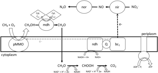 Proposed model for NO2- respiration and central metabolism in Methylomicrobium album strain BG8. During hypoxia, M. album strain BG8 utilizes electrons from aerobic CH4 oxidation to respire NO2-. Abbreviations: pMMO, particulate methane monooxygenase; mdh, methanol dehydrogenase; Cyt, cytochrome; nor, nitric oxide reductase; nir, nitrite reductase; ndh, NAD(P)H dehydrogenase complex; Q, coenzyme Q; bc1, cytochrome bc1 complex.