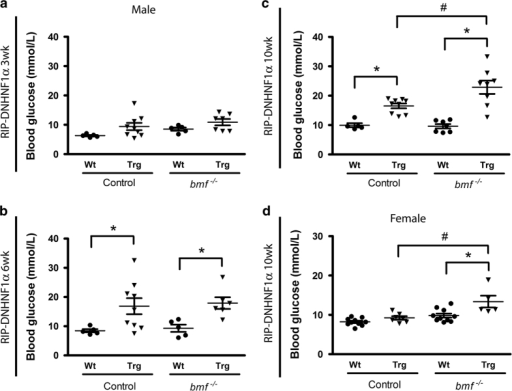 bmf knockout increases non-fasting blood glucose levels. Non-fasted blood glucose levels were measured at 3- (a), 6- (b) and 10-week-old (c) male and female (d) mice. Transgenic DNHNF-1α mice deficient in bmf demonstrated increased blood glucose at 10 weeks compared with matched bmf-expressing transgenic DNHNF-1α controls in both colonies. Data presented as mean±S.E.M. from n=5–10 per group. *P<0.05 compared with litter-matched controls; #P<0.05 compared with matched bmf-expressing controls (ANOVA, post hoc Tukey's test).