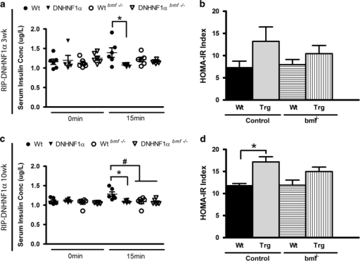 Deletion of bmf expression decreases serum glucose-stimulated insulin secretion. The change in serum insulin from fasting levels was determined at 0 and 15 min after i.p.GTT in male 3- (a and b) and 10-week-old mice (c and d) fasted for 16 h. Homeostasis model was used to assess insulin resistance (HOMA-IR) during intraperitoneal glucose tolerance test. Data are presented as the mean change in insulin levels±S.E.M. n=6-7 per group. *P<0.05 compared with litter-matched controls; #P<0.05 compared with matched bmf -expressing controls (ANOVA, post hoc Tukey's test).