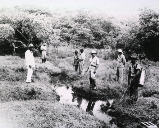 <p>A group of men stands amidst a densely vegetated swamp and sprays.</p>
