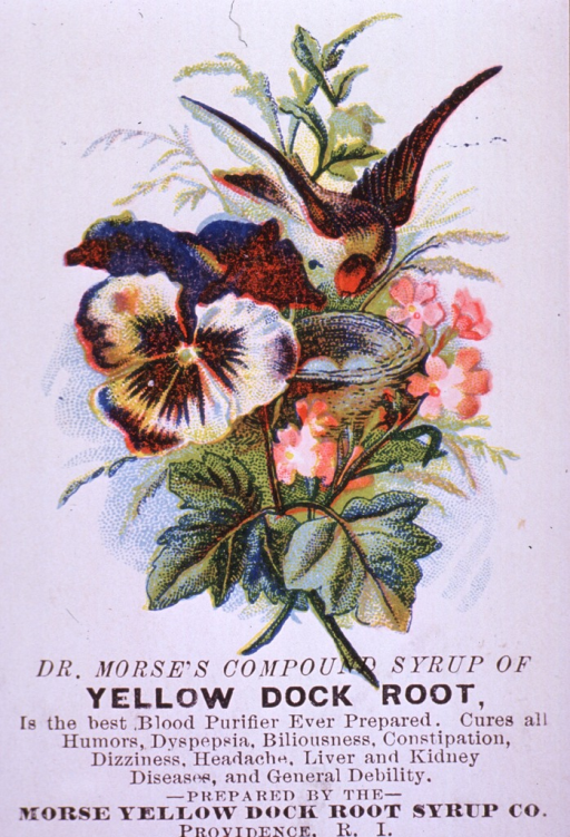 <p>Advertising card for Yellow Dock Root Syrup, a blood purifier, which can be used to cure various ailments and general debility.  Visual motif:  Floral arrangement with bird.</p>