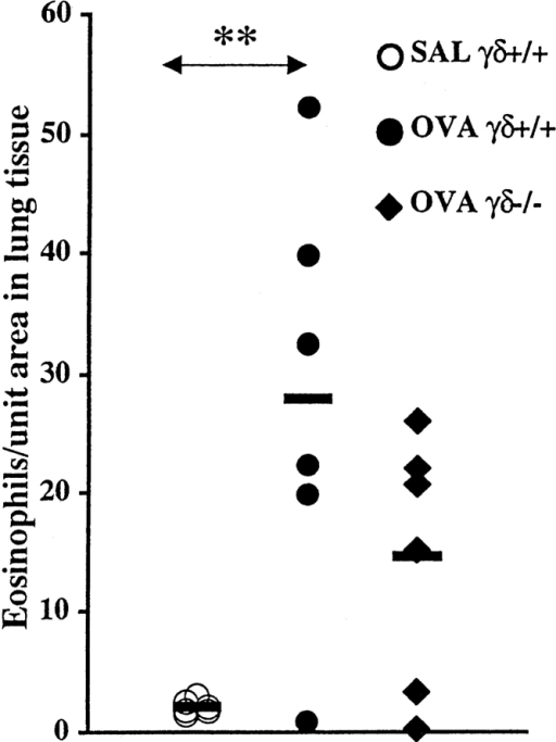 Number of eosinophils in lung tissue from immunized wild-type and γ/δ T cell– deficient animals receiving seven  exposures with OVA or SAL.  Solid bars, mean (n = 6 per  group); SAL γ/δ+/+, SAL-challenged wild-type mice; OVA γ/ δ+/+, OVA-challenged wild-type mice; OVA γδ−/−, OVA-challenged γ/δ T cell–deficient  animals. An increased number of  eosinophils in lung tissue was  observed in OVA-challenged  wild-type mice compared with  corresponding SAL-exposed animals (**P < 0.01). No significant  difference was observed between  OVA-challenged wild-type mice  and γ/δ T cell–deficient mice.
