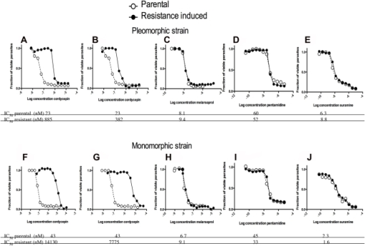 Cordycepin-resistance strains are not cross resistant to suramin, pentamidine and melarsoprol.Cordycepin-resistant pleomorphic AnTat1.1 A–E) and monomorphic Lister 427 F–J) parasites were induced after selection with increasingly higher concentrations of the cordycepin during four months of culture. Parasites in all sub-panels were incubated with the indicated molar concentrations of the trypanocidal compounds for 70 h, when WST-1 reagent added. Two h after incubation, parasite viability was measured. The fraction of parasites in comparison to untreated controls is depicted. A, F Four months after incubation with cordycepin, parasites reached a 40–60 fold decreased sensitivity to cordycepin. B, G Resistance to different concentrations cordycepin after 4 week-long culture of resistant parasites in absence of the drug is shown. Sensitivity of cordycepin-resistant pleomorphic parasites to melarsoprol C, H), pentamidine D, I) or suramin E, J) is depicted.