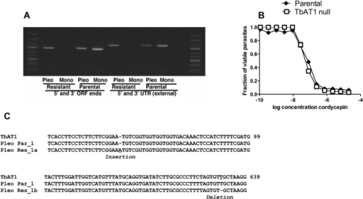 Sequencing of candidate genes.A) The PCR DNA amplification from T.b. brucei pleomorphic AnTat1.1 or monomorphic Lister 427 parasites is shown. Primers recognizing the 5′ and 3′ UTR and the 5′ and 3′ ends of the ORF of the TbAT1 gene were used. B) A single base insertion at position 61 and a single base deletion at position 631, causing the synthesis of a non-functional truncated gene product in clones of the resistant pleomorphic strain but not in the parental or in the genome annotated strain (Lister 427). C) TbAT1−/− and parental parasites were incubated with different doses of cordycepin for 70 h, when WST-1 reagent added. Two h after incubation, parasite viability was measured. The fraction of parasites in comparison to untreated controls is depicted.