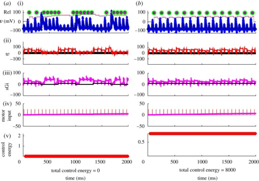 (a) Uncontrolled reduced TC-cell dynamics in the Parkinsonian state with fluctuating current from the GPi (sGi). (b) Perfect DBS stimulation filling in the troughs in the fluctuating current from the GPi. (i) Noisy observable voltage (blue symbols), reliability as piecewise continuous plots without (blue) and with (red) control on, the green circles are the timing of SM spikes and the smaller red circles are transmitted spikes. (ii) Estimated w (red). (iii) Real (black) and estimated (magenta) synaptic current from the GPi (sGi, estimated values multiplied by 10 for discriminability from the true values). (iv) Real (red) and estimated (magenta) motor input (we are deliberately not trying to reconstruct motor input in the reconstruction through Q ratio adjustment). (v) Running control energy, the squared value of the control signal at each time point and the total sum of squares given as total control energy.