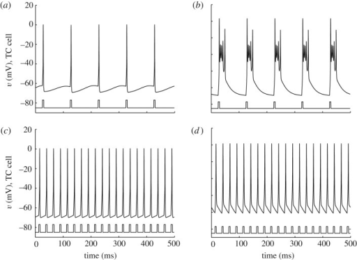 (a,b) Stimulation of TC-cell model at 10 Hz and (c,d) 40 Hz, (a,c) at low and (b,d) high levels of tonic inhibition. (Adapted from Rubin & Terman (2004).)
