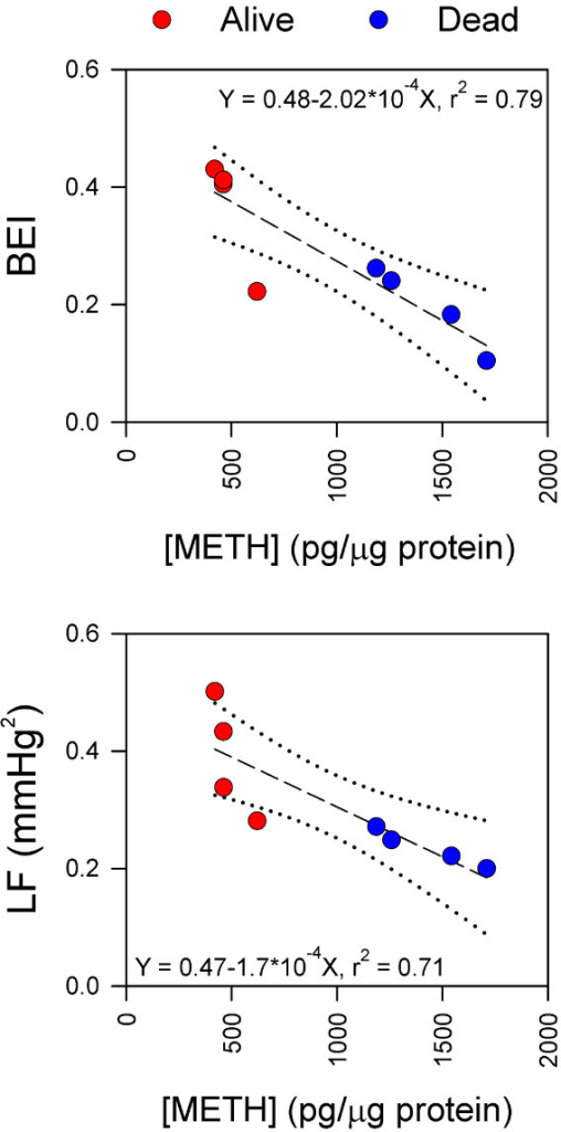 Fatality from METH intoxication correlates with its distribution in brain. Linear regression analysis of the relationship between concentration of METH in RVLM and BEI or power density of the LF component of systolic blood pressure. Dotted lines denote 95% confidence intervals, and r2 denotes coefficient of correlation.