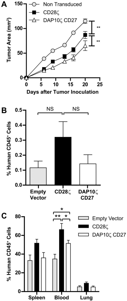 Human T cells bearing the αerbB2DAP10ζCD27 CAR inhibit tumor growth in mice.(a) CAR-expressing human T cells were injected on days 0, 1 and 2 intravenously into NOD-SCID mice injected subcutaneously on day 0 with 24JK-erbB2 sarcomas, and tumor growth monitored (9–10 mice/group). (b,c) Localization of T cells was determined on dissociated tumor and tissues on day 4 of tumor growth using flow cytometry (5 mice/group). (Error bars = SEM). *p<0.05, **p<0.005, NS = not significant.