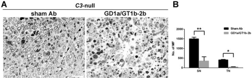 Anti-glycan Abs induced inhibition of axon regeneration in C3- mice.Light micrographs of sciatic nerve from sham Ab- or GD1a/GT1b-2b-treated C3- mice (A). Regenerating MF counts in sciatic and tibial nerves from C3- mice treated with sham Ab or GD1a/GT1b-2b mAb (B). *p<0.05; **p<0.001 (Student's t-test). N  =  12 per group. Error bars, s.e.m. Scale bar, 10 µm. MF  =  myelinated nerve fibers.