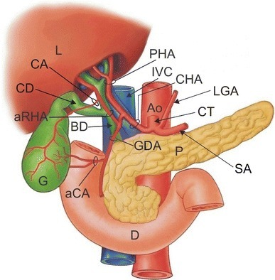 Schematic drawing of the structures of the hepatobiliar | Open-i