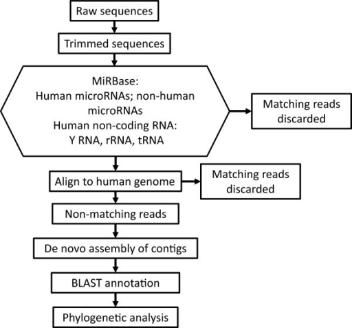 Schema of the strategy for analysis of sequencing data. Reads that did not align to human sequences or other known microRNAs were assembled into contigs. These were annotated by BLAST alignment to the NCBI nr database and phylogenetic analysis performed with the gi numbers of the top resulting hits.