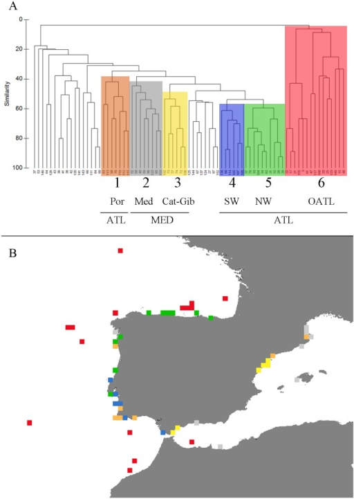 Biogeographic relationships in pycnogonid Iberian species assemblage in 0.3° by 0.3° grid cells.Cluster analysis based on the Bray-Curtis faunal similarity among 0.3° by 0.3° grid cells that contain three or more species of Iberian pycnogonids (A), and geographic representation of the cluster distribution.