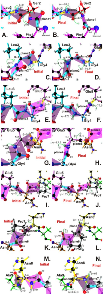 Comparison of initial and final peptide-bond planes for 25608.37. A, C, E, G, I, K and M.Green cubes indicate initial theoretical positions for 25068.37 regarding PBR residues forming Φ and ψ angles on planes 1 to 9. B., D., F., H., J., L. and N. Final position of these angles reaching the lowest energy to avoid topochemical steric clashes, as measured for the lowest energy conformer, based on 3D structure obtained by 1H-NMR. Most angles were close to -93° ± 25° (Φ) and 134° ± 15° (Ψ), similar to PPIIL. Minimisation values for atom clashes as determined by Ramachandran plot. HLA-DRβ1* classification according to experimental binding to purified molecules, binding motifs and binding registers is shown at the top on the right-hand side.