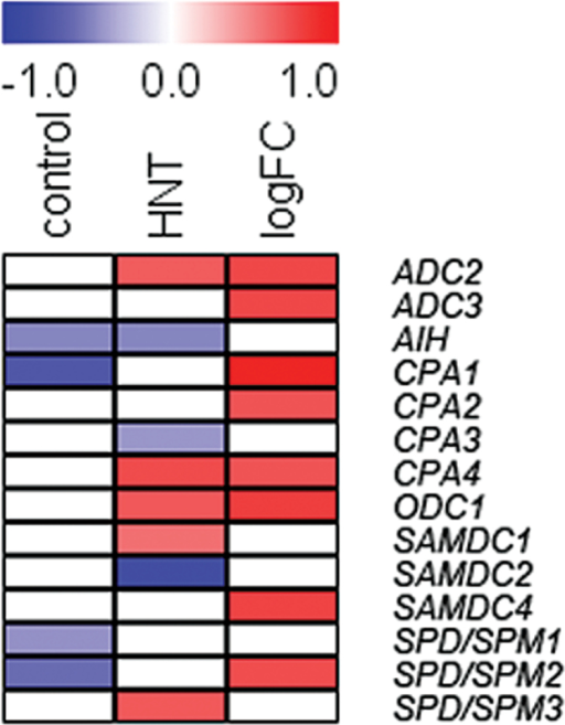 Heat map with significant Spearman correlations (p<0.05) between the expression levels of genes encoding enzymes of polyamine biosynthesis and HNT sensitivity rank (Glaubitz et al., 2014) under control and HNT conditions as well as the log2 fold change in gene expression. Red depicts positive and blue negative correlations. Genes are sorted according to their order in the polyamine biosynthetic pathway.