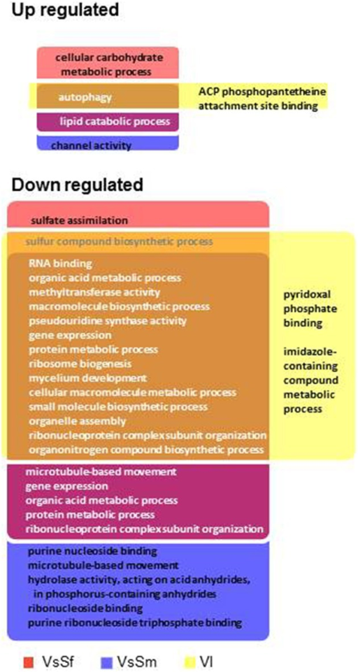 Enriched GO terms in differentially regulated gene sets in presence of bacteria or during vegetative incompatibility for up or down regulated gene sets.