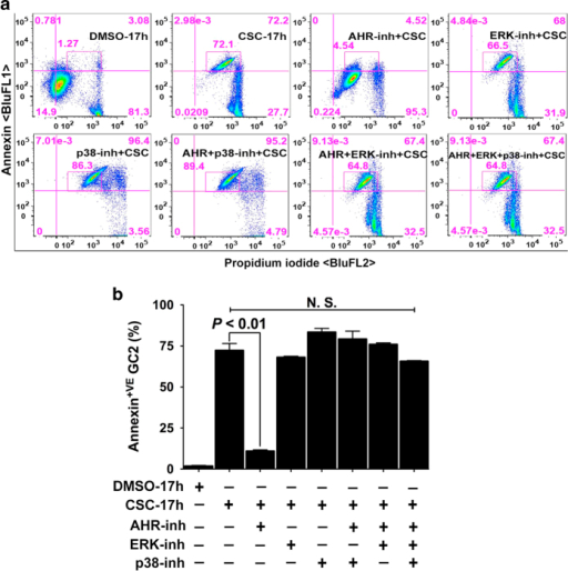 Inactivation of MAPKs does not prevent CSC-induced membrane damage. (a and b). Spermatocytes were exposed to DMSO (0.1%) or CSC (40 μg/ml) for 17 h. In the antagonists treatment groups, the cells were first pretreated with AHR or MAPK inhibitors or together for 1 h followed by exposure to CSC for 17 h (a). The percentage of cells segregated following co-staining with annexin V alexa fluor 488 and PI was determined by FACS analysis using FlowJo software (v9.7.5, FLOWJO, LLC.) as described under materials and methods. The representative histogram demonstrates the distribution of spermatocytes at 17 h. The percent difference in annexin V+ cells is shown within the quadrant. (b) Histograms represent the mean flow cytometric data from DMSO-, CSC- or antagonists pretreated samples at 17 h of more than three independent experiments, each assayed in triplicate±S.E.M. n=4.