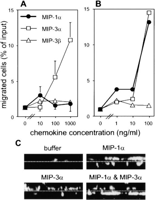 MIP-1α and MIP-3α elicit different migratory and/or adhesive responses in CD34+ HPC-derived LC and DC precursors. Results shown in A and B were obtained using the transwell chemotaxis assay and the 48-well Boyden-type chamber chemotaxis assay, respectively. For both assays, day 6 LC and/or DC precursors were harvested and tested for their migratory responses to MIP-1α (filled circles), MIP-3α (open squares), and MIP-3β (open triangles). Mean percentages (± SEM) of migrated and detached (A; n = 3) and migrated, membrane-bound cells (B; n = 2) are shown. (C) Representative vertical sections through 5-μm pore size membranes used in the transwell chemotaxis assay. The assays were performed using the indicated stimuli (MIP-1α at 100 ng/ml, MIP-3α at 1 μg/ml, and the combination of both), or buffer alone. Membrane-bound cells were fixed and labeled, and membranes were subjected to confocal laser scanning microscopy. Broken lines denote the position of the membrane.