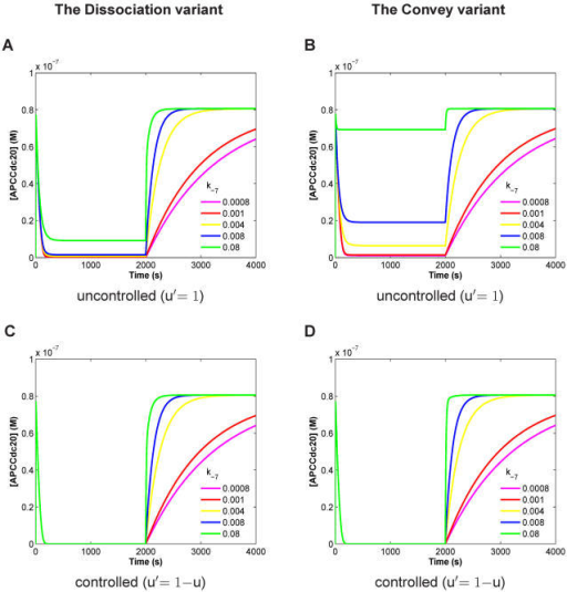 Dynamical behavior of APC:Cdc20 concentration versus time for the Dissociation variant (A, C) and the Convey variant (B, D) each in the uncontrolled (A, B) and the controlled (C, D) case.Calculation results are presented for different values of the rate k−7 in [s−1 >(dissociation of MCC:APC) between 0.0008 and 0.08, because k−7 is unknown and crucial for model behavior, as indicated. The APC:Cdc20 concentration should be close to zero before attachment and should rise quickly after attachment. Spindle attachment occurs at t = 2000s (switching parameter u from 1 to 0). For the uncontrolled case (A, B), both variants cannot explain the checkpoint behavior; and the Convey variant is even less satisfying compared to the Dissociation variant. In the controlled case (C, D), both variants fully inhibit APC:Cdc20 before attachment and both show fast switching recovery for high k−7 values. The controlled Convey variant (D) is slightly faster (by about 5 mins) in switching compared to the controlled Dissociation (C) variant. Parameters setting according to Table 1 and Table 2.