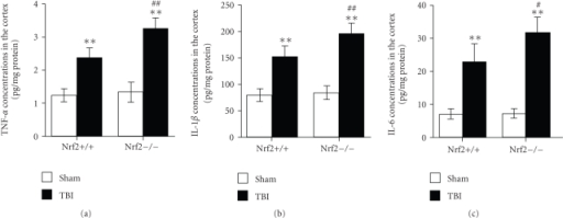 Concentrations of inflammatory cytokines in the cortex of sham and injured Nrf2 (+/+) and Nrf2(−/−) mice. Concentrations of (a) TNF-α, (b) IL-1β, and (c) IL-6 were determined byELISA in the brain samples of Nrf2 (+/+) and Nrf2 (−/−) mice 24 hoursafter TBI. The figure indicates that concentrations of TNF-α, IL-1β, and IL-6 in brain were significantly increased after TBI and weregreater in Nrf2 (−/−) mice than in Nrf2 (+/+) mice. Datarepresents mean ± SEM (n = 5 per group). **P < .01 versus sham control of thesame genotype. #P < .05 and ##P < .01 versus injured wild-type mice.