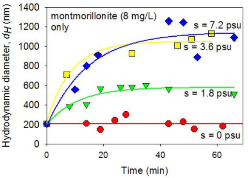 Average hydrodynamic diameters (dH) of montmorillonite-only suspensions (8 mg/L) in constantly stirred solutions were measured as a function of time after mixing with artificial seawater (ASW) using dynamic light spectroscopy. The pH was circumneutral. The results show a lack of aggregation in the zero salinity suspension. On the other hand, at elevated salinity values, (S = 1.8 – 7.2 psu), the colloidal particles rapidly aggregate during the initial ~15 minutes following the ASW mixing. In the S = 1.8 psu suspension, the aggregates reach the steady state average size of dH ≈ 600 nm after 20 minutes. In the S = 3.6 and S = 7.2 psu suspensions, the aggregates become larger (dH ≈ 1,100 nm) after the initial rapid aggregation.