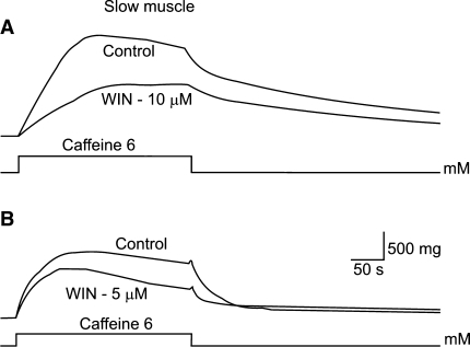 Effects of WIN 55,212-2 on caffeine contractures in slow muscle fibers. In a and b, tension decreased in the presence of WIN 55,212-2 (10 and 5 μM, respectively). Control caffeine contractures in normal solution are also shown (upper records). This effect of WIN 55,212-2 was reversible. Different muscle bundles were used for each experiment