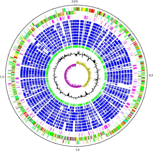 Schematic circular diagram of the S. suis P1/7 genome.K | Open-i