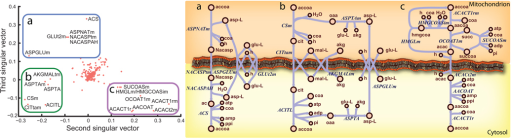 Singular Value Decomposition (SVD) of feasible pathways elucidates potential pathways that allow for coupling of mitochondria acetyl-CoA metabolism and cytosolic acetylcholine production21,000 unique feasible reaction sets were computed, each showing transport of mitochondrial acetyl-CoA carbon to the cytosol in human metabolism. SVD of a matrix of all 21,000 pathways yielded 3 primary pathways that allow this coupling of mitochondrial metabolism to acetylcholine production, by carrying the acetyl-CoA carbon on (a) N-acetyl-L-apartate, (b) citrate, or (c) acetoacetate. As shown by the second singular vector, reactions in the pathway with citrate tend to be missing from pathways when the reactions for the acetoacetate pathway are included. The third singular vector shows a similar relationship of the N-acetyl-L-aspartate pathway. The omic data and known enzyme localization only support the usage of citrate and acetoacetate as potential carriers in neurons.