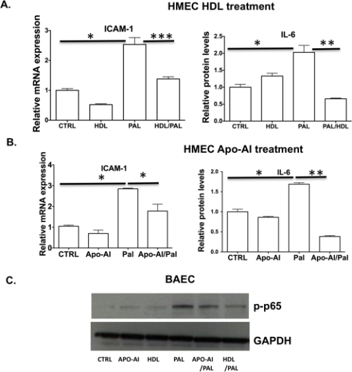 HDL or apoA-I attenuates palmitic acid dependent NF- κB signaling in endothelial cells.HMEC were pretreated with vehicle (labeled as control) or with human HDL (50 µg/ml) or ApoA-1 (50 µg/ml) for 16 hours, washed and then either treated with palmitate complexed with BSA (100 µM) for 3 hours or treated with BSA alone. A–B. ICAM-1 mRNA expression was analyzed using quantitative RT-PCR. IL-6 cytokine levels in supernatants were assessed by ELISA (n = 3). Data represents mean ± SD and *p<0.05,**p<0.01,***p<0.005. C. BAEC lysates were prepared after pretreatment with apoA-I/HDL and phopho-P65 levels were assessed by Western blot.