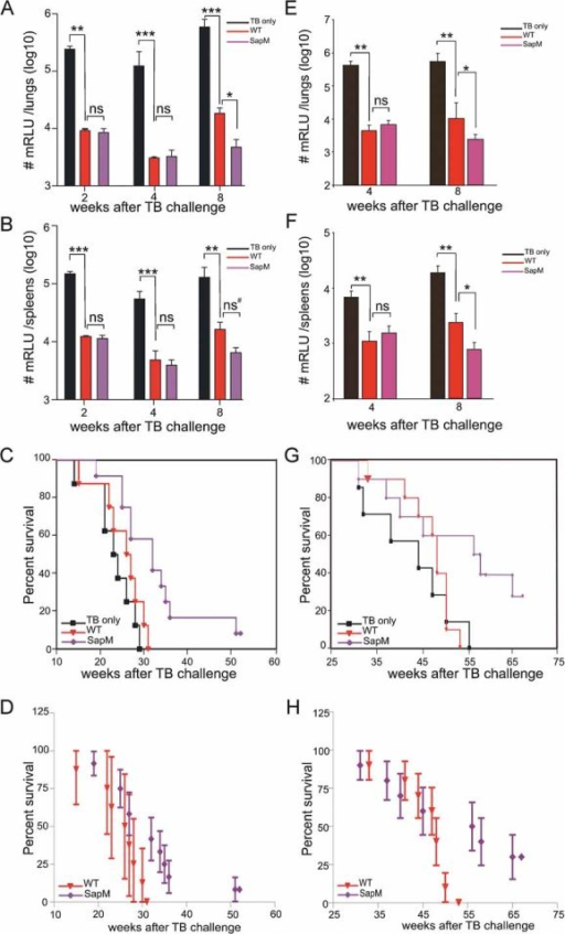 Protective efficacy of M. bovis BCG WT versus mutant SapM::T (Mb3338) in BALB/c miceA,B. BALB/c mice were vaccinated subcutaneously with the parental or mutant M. bovis BCG strain. Three months post-vaccination, animals were intravenously infected with luminescent M. tuberculosis H37Rv. Mice were sacrificed 2, 4, and 8 weeks post-infection, and the number of bacteria in lungs (A) and spleens (B) was determined by luminometry. Individual mice were evaluated for RLU, and averages and error bars of +/− 1× standard deviation (s.d.) are shown. (One-way ANOVA, Bonferroni's multiple comparison test; ***p < 0.0001; **p < 0.0012; *p < 0.05; ns, not significant).C,D. Mortality of mice was monitored weekly for 11 months. The percentage of survival is shown. The mean survival time (MST) for unvaccinated mice was 23.5 weeks, and for mice vaccinated with BCG WT and SapM::T 26.5 weeks and 32 weeks, respectively (p = 0.0145; Kaplan–Meier, Bonferroni). We have included the 95% confidence intervals (CI) for the survival proportions in panel D.E,F. BALB/c mice were vaccinated subcutaneously with the parental or SapM mutant M. bovis BCG. After 3.5 months, animals were intratracheally infected with luminescent M. tuberculosis H37Rv. Mice were sacrificed 4 or 8 weeks post-infection and the number of bacteria in lung (E) and spleen (F) was determined by luminometry. Individual mice were evaluated for RLU, and averages and error bars of +/− 1× s.d. are shown. (One-way ANOVA, Bonferroni's multiple comparison test; ***p < 0.0001; **p < 0.0012; *p < 0.05; ns, not significant; ns#, not significant with 95% CI of difference from −0.14 to 0.946).G,H. Mortality was also monitored weekly for 17 months. The percentage of survival is shown. The MST for unvaccinated mice was 44 weeks, and for mice vaccinated with BCG WT and SapM::T, respectively, it was 48 and 56 weeks (p = 0.05; Kaplan–Meier, Bonferroni; Panel G). Panel H shows survival with indication of the 95% CI for the survival proportions. At the time-points beyond 50 weeks post-challenge, 95% CI on the survival proportions of SapM vaccinees do not overlap with survival proportions of the WT vaccinees, demonstrating a significant difference (p < 0.05).